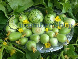 Mandurian Round Cucumber