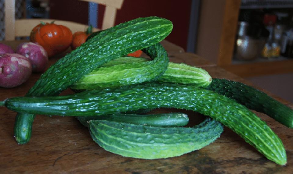Suyo_Long_Cucumber